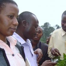 A plant doctor shows farmers how to use their smart phones to photograph plant pests.